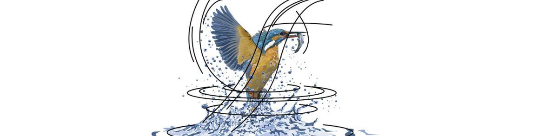 Web_Eisvogel.jpg
