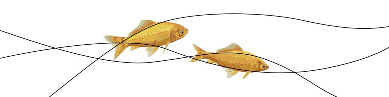 Web_Goldfisch.jpg